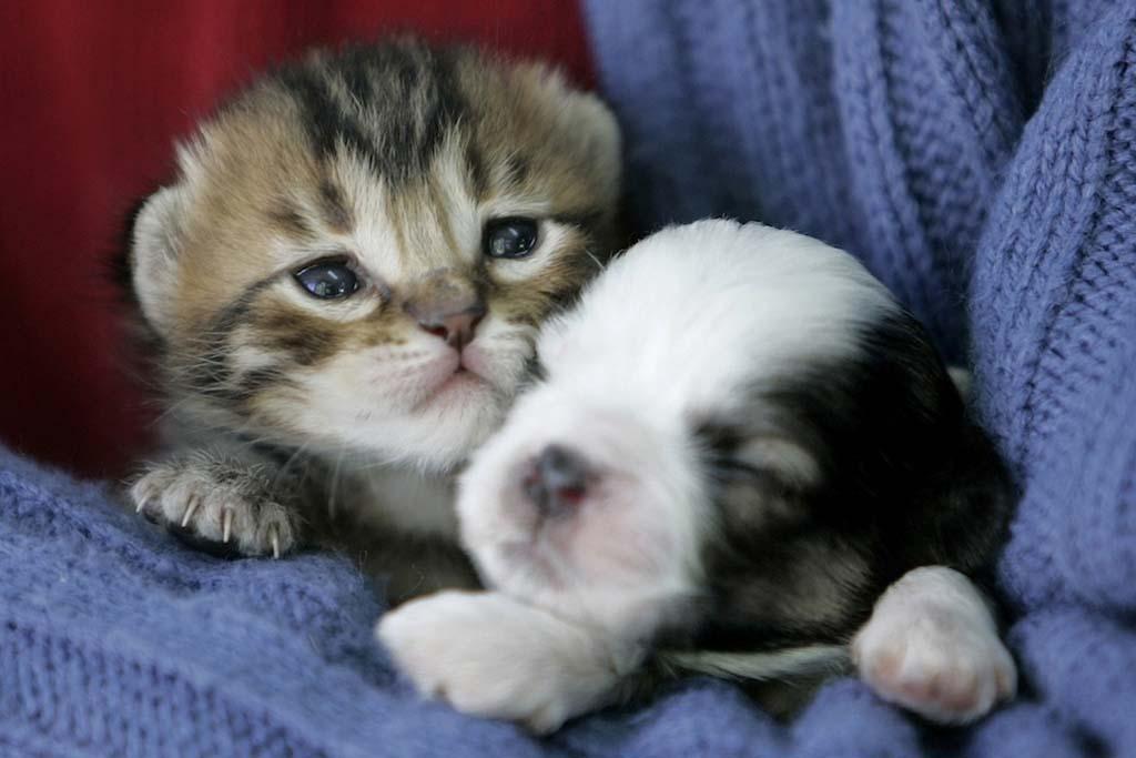 Amizades animais incomuns 2 18