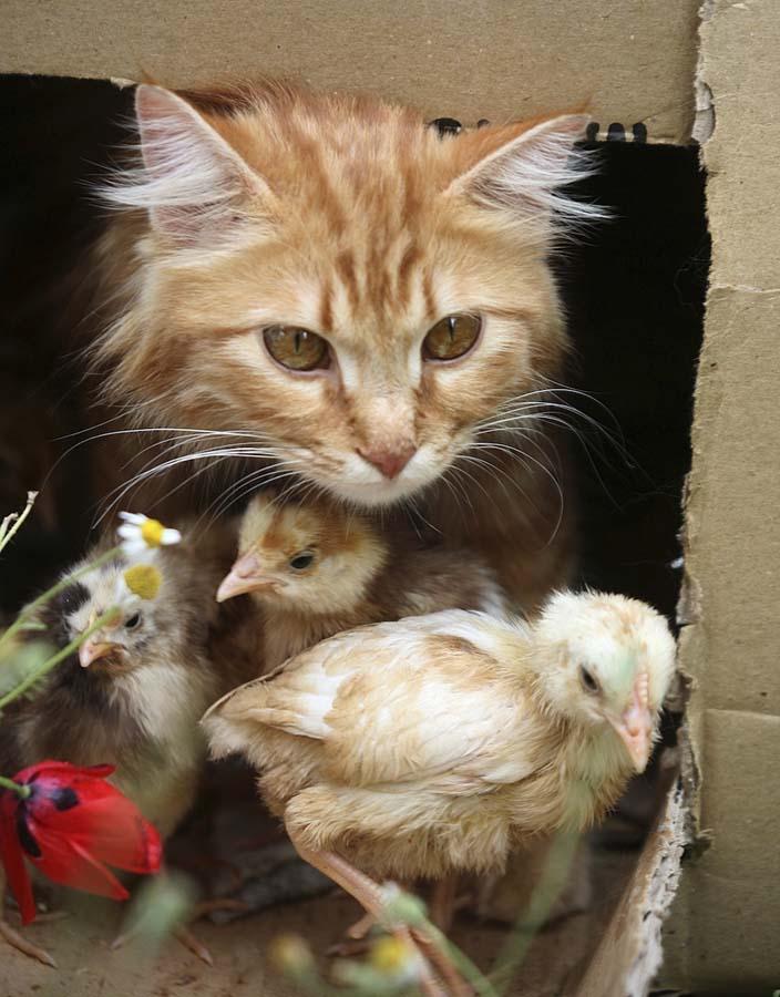 Amizades animais incomuns 2 19