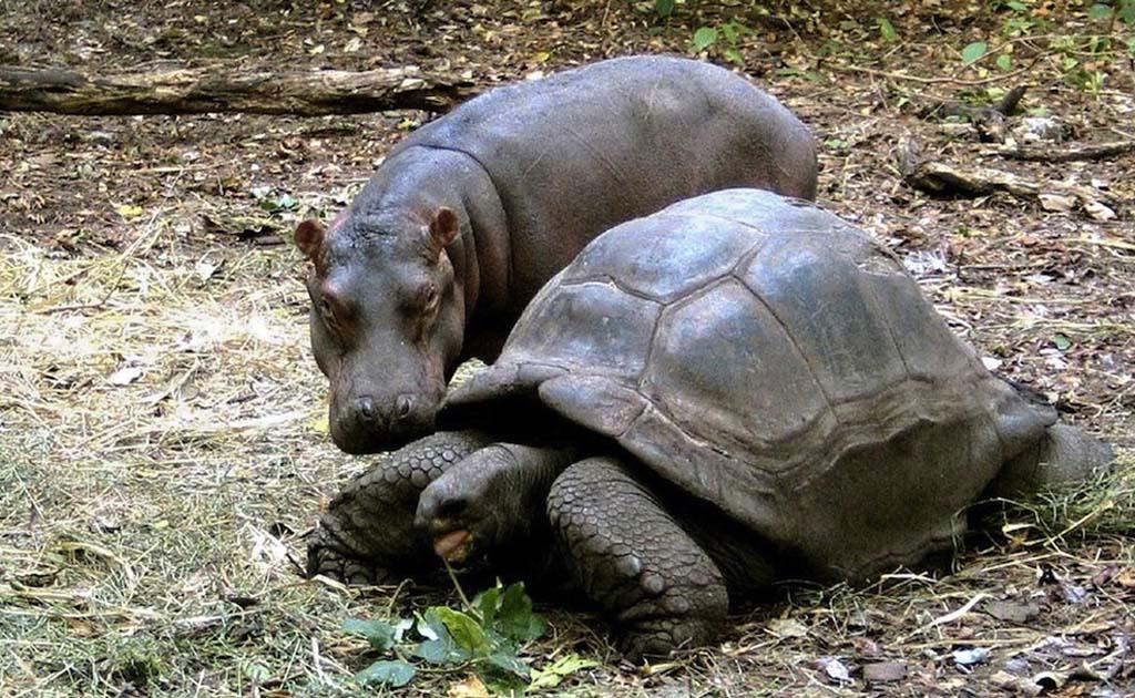 Amizades animais incomuns 2 20