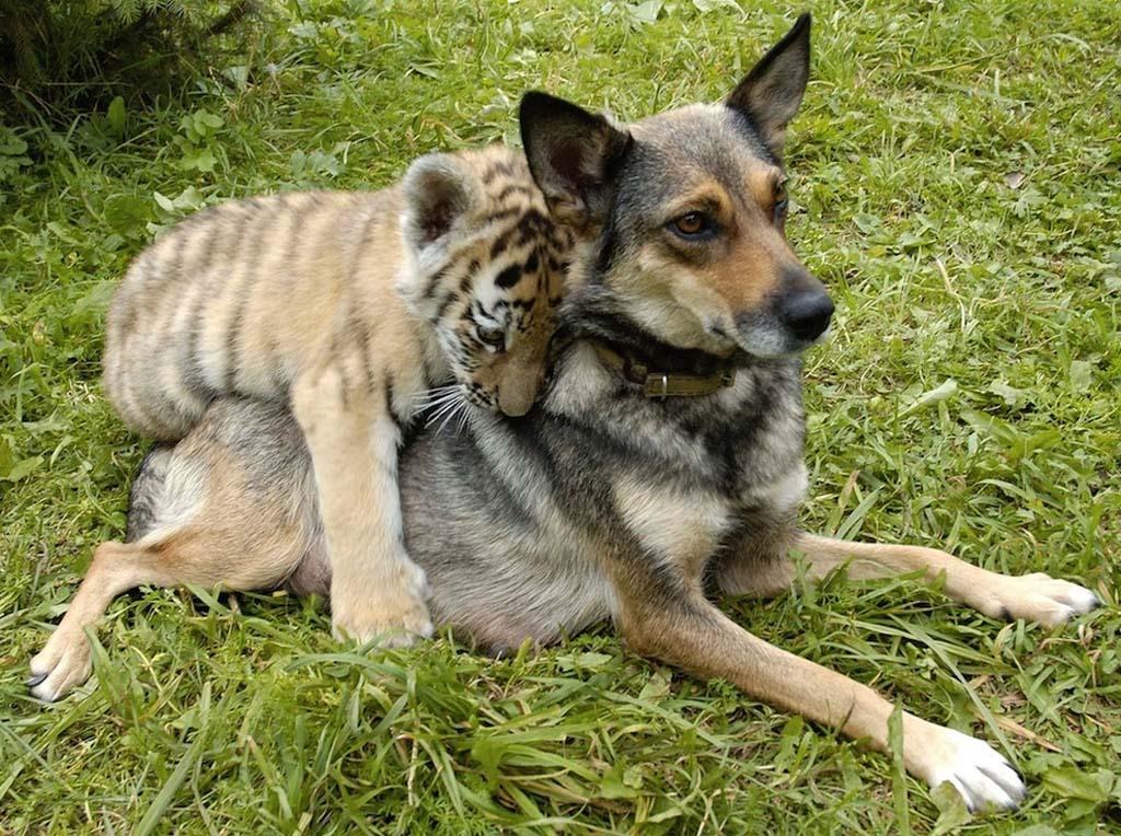 Amizades animais incomuns 2 21