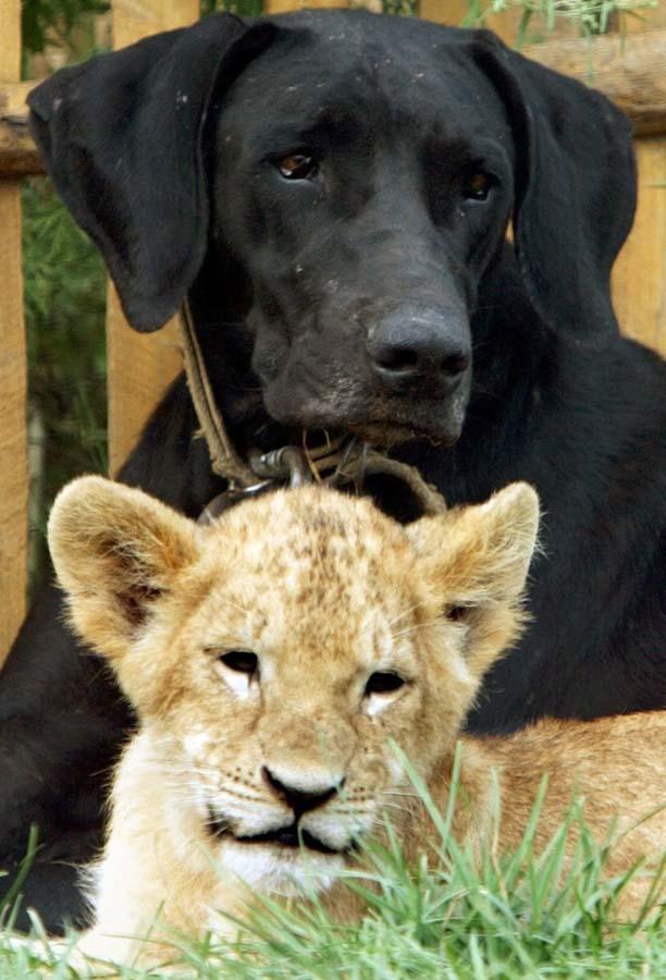 Amizades animais incomuns 2 22