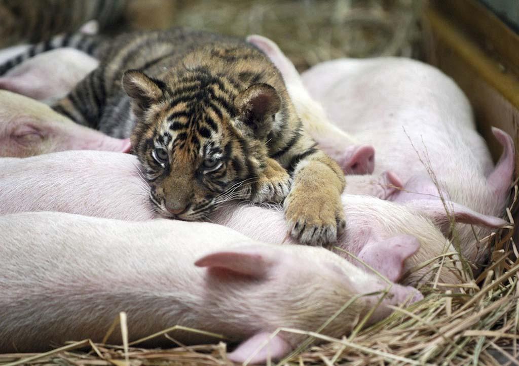 Amizades animais incomuns 2 25