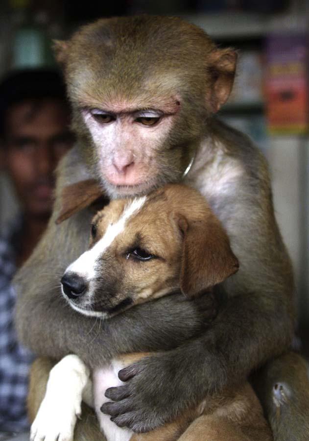 Amizades animais incomuns 2 26
