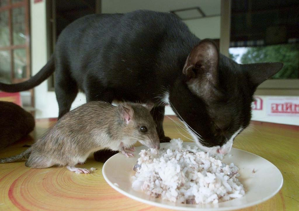 Amizades animais incomuns 2 27