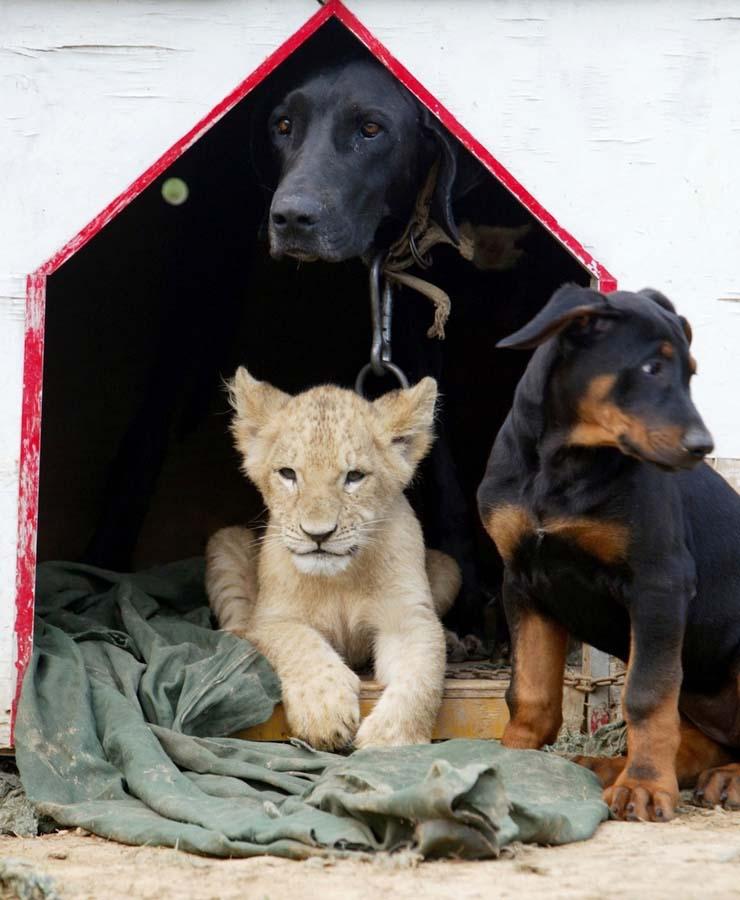 Amizades animais incomuns 2 29