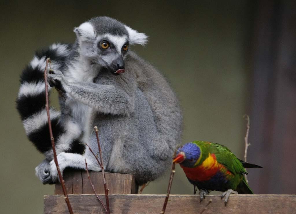 Amizades animais incomuns 2 30