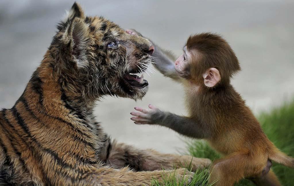 Amizades animais incomuns 2 31