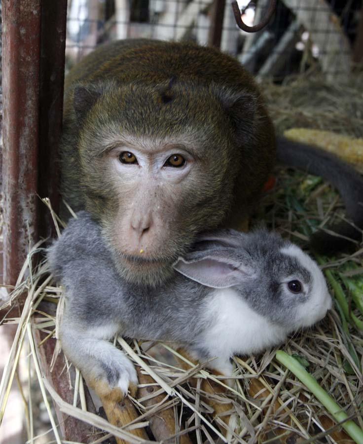 Amizades animais incomuns 2 32