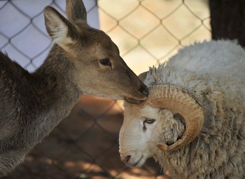 Amizades animais incomuns 2 33