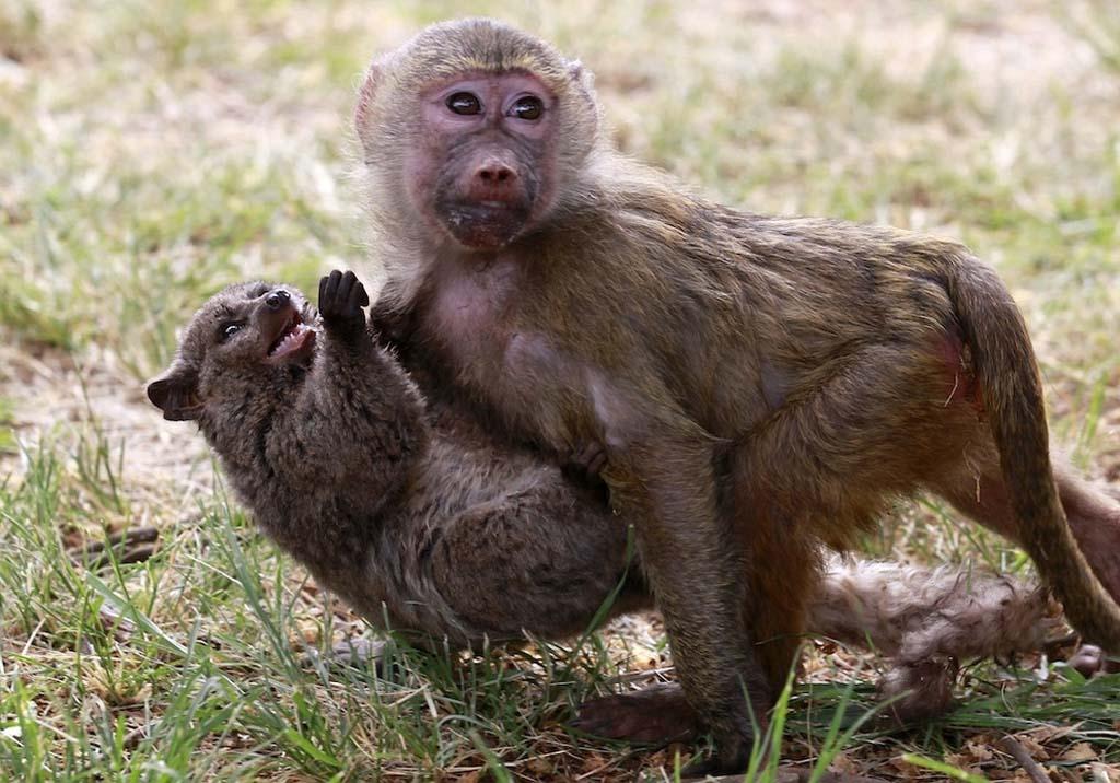 Amizades animais incomuns 2 35
