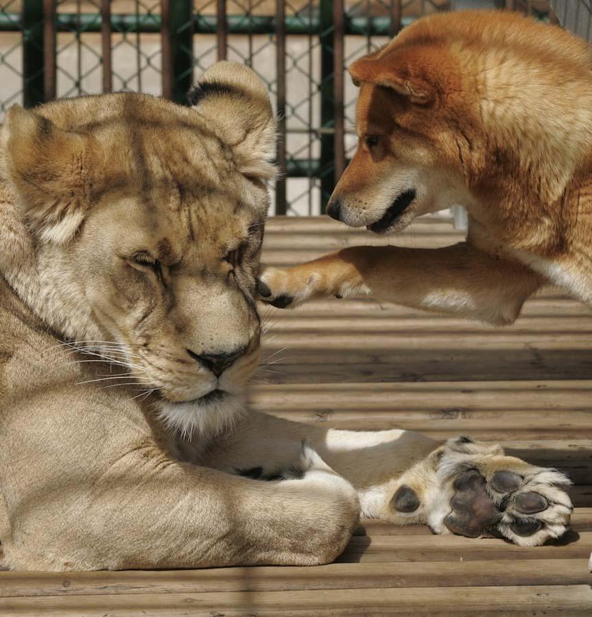 Amizades animais incomuns 2 36