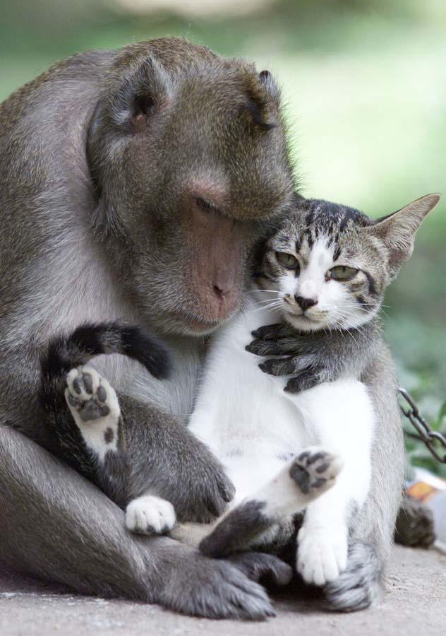 Amizades animais incomuns 2 37