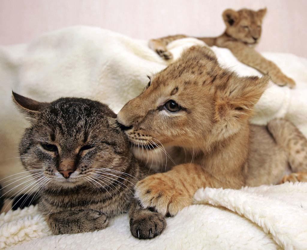 Amizades animais incomuns 2 38