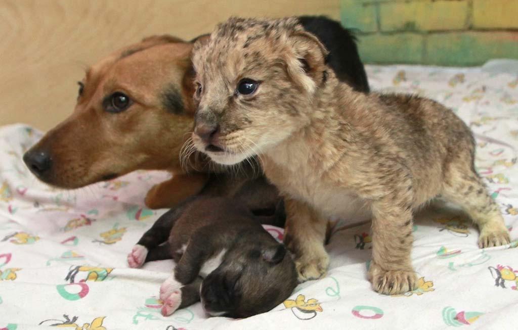 Amizades animais incomuns 2 39