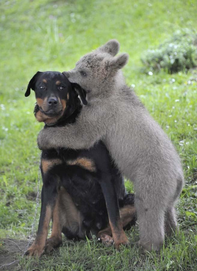 Amizades animais incomuns 2 40