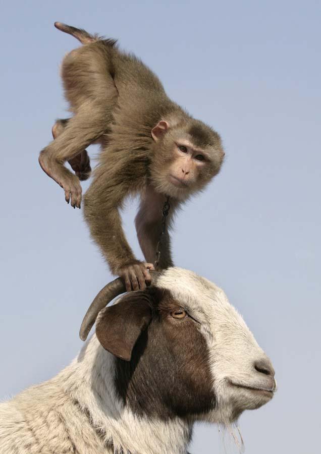 Amizades animais incomuns 2 42