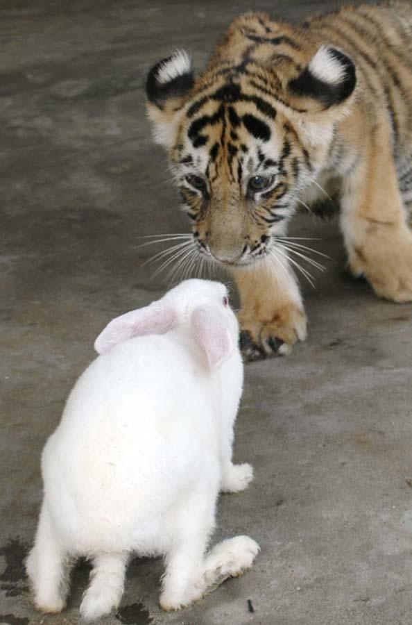 Amizades animais incomuns 2 45
