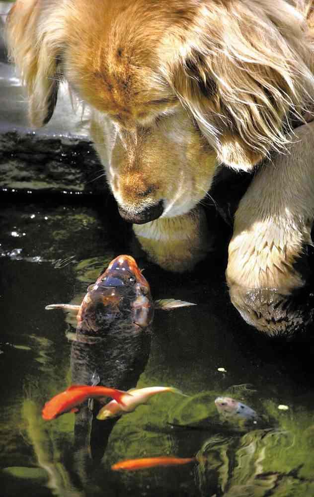 Amizades animais incomuns 3