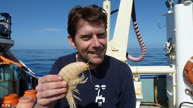 Encontram um camarão dez vezes maior que o normal