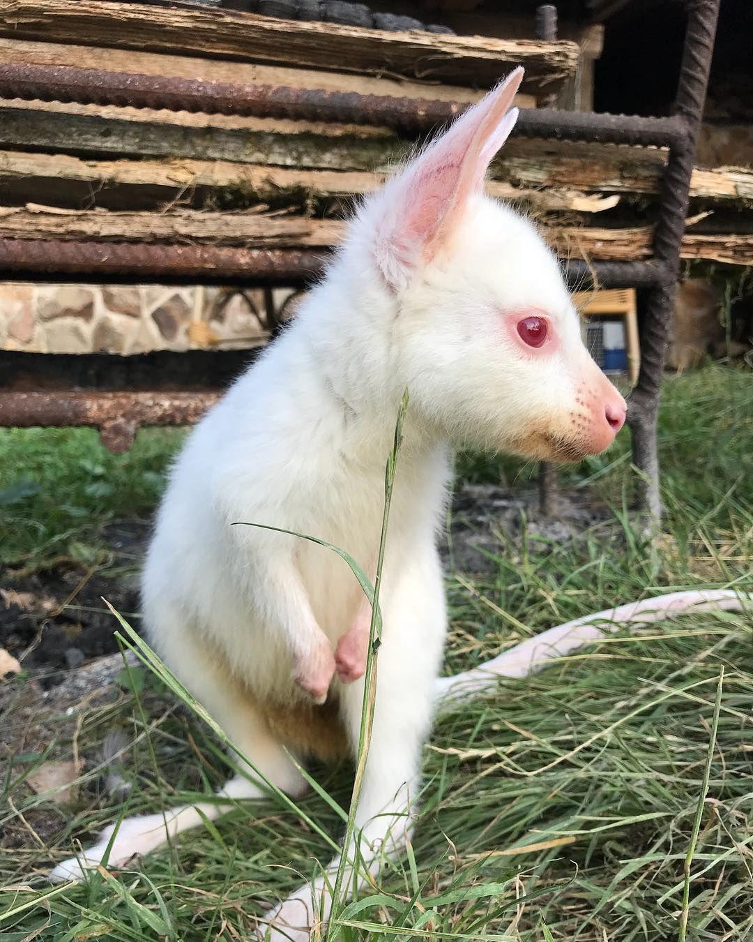 As cores da natureza: albinismo, melanismo e outras variações genéticas 07