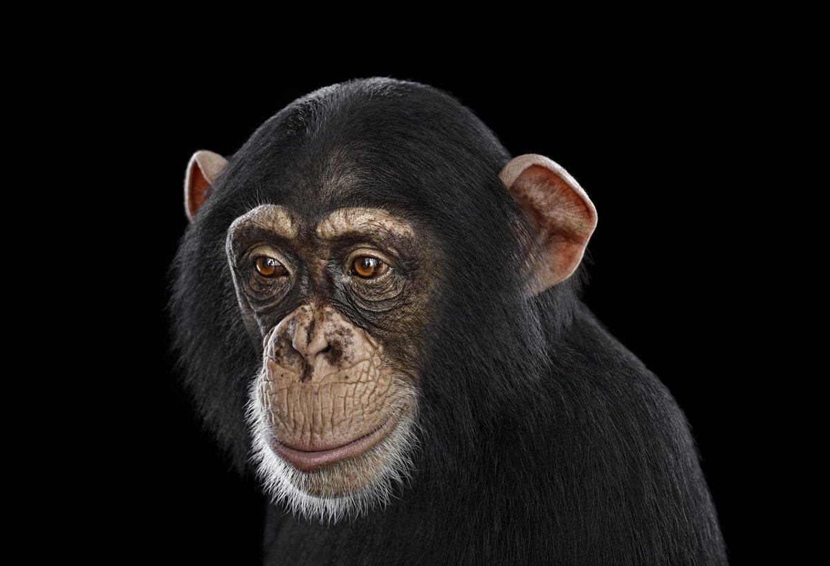 15 retratos fantásticos de animais exóticos tão de pertinho como você nunca viu 01
