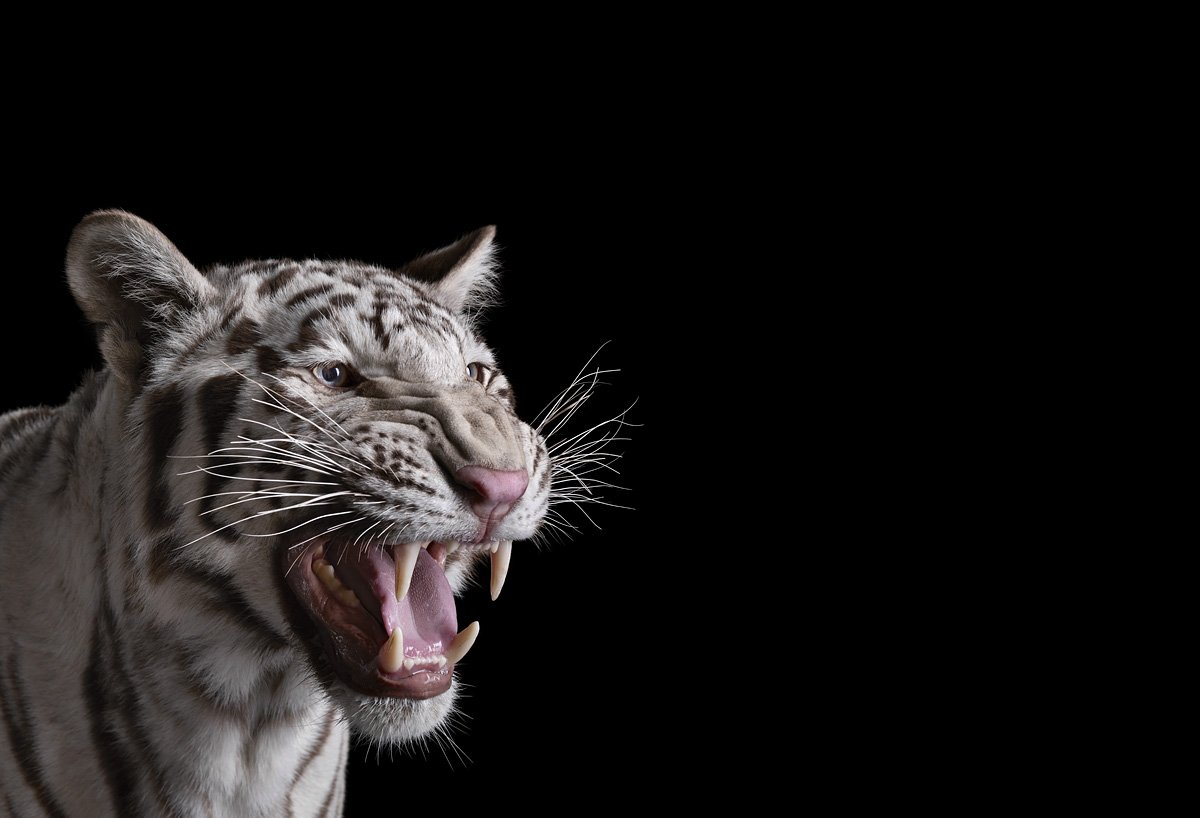 15 retratos fantásticos de animais exóticos tão de pertinho como você nunca viu 02