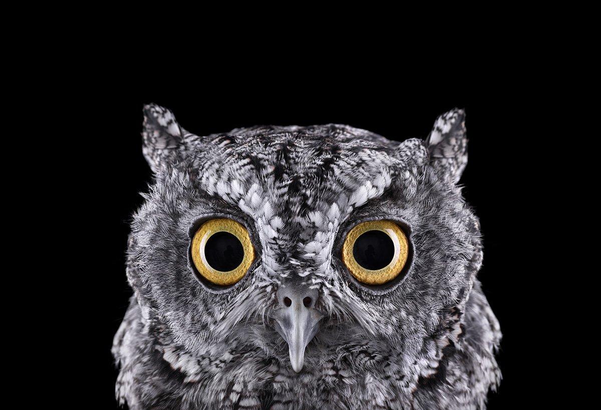 15 retratos fantásticos de animais exóticos tão de pertinho como você nunca viu 04
