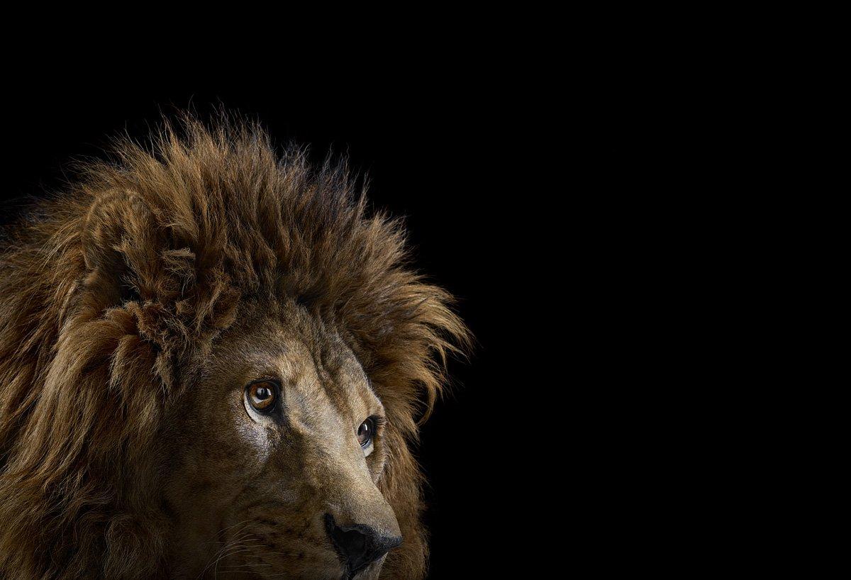 15 retratos fantásticos de animais exóticos tão de pertinho como você nunca viu 05