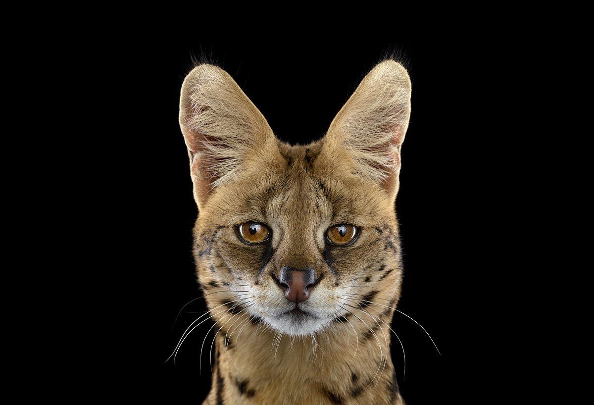 15 retratos fantásticos de animais exóticos tão de pertinho como você nunca viu 06