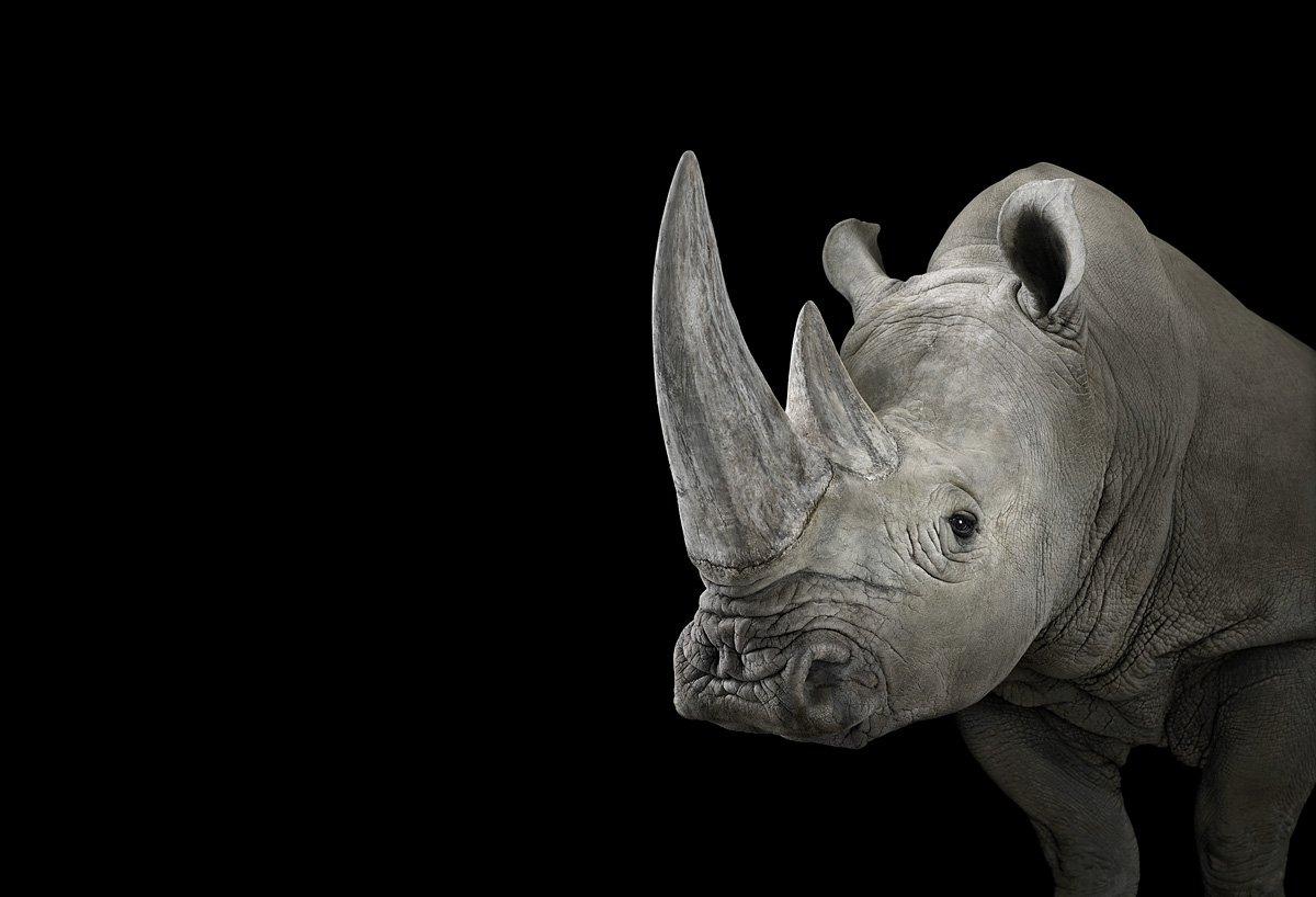 15 retratos fantásticos de animais exóticos tão de pertinho como você nunca viu 07