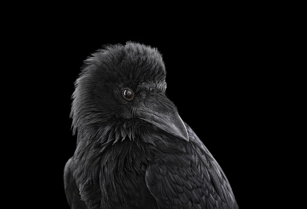 15 retratos fantásticos de animais exóticos tão de pertinho como você nunca viu 08