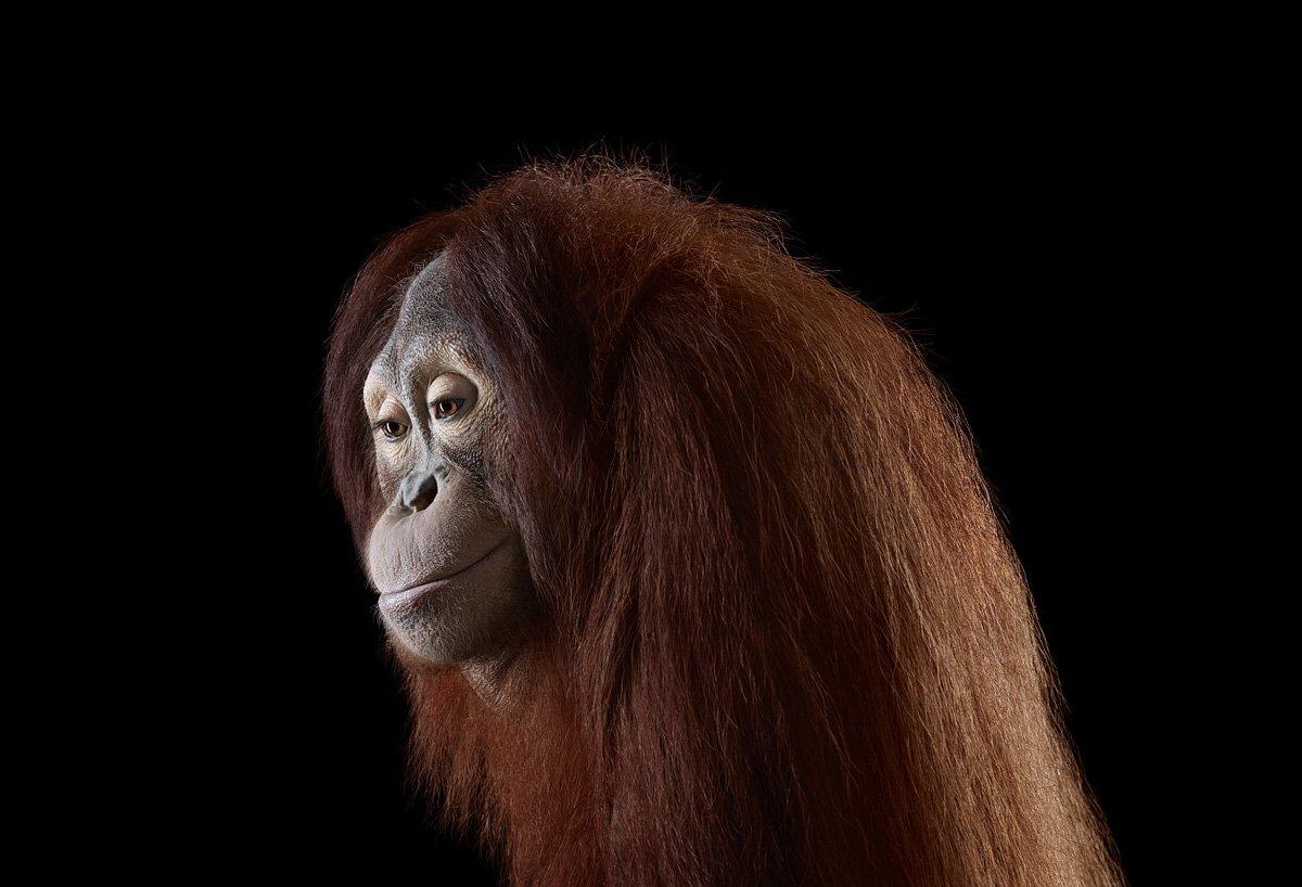 15 retratos fantásticos de animais exóticos tão de pertinho como você nunca viu 09