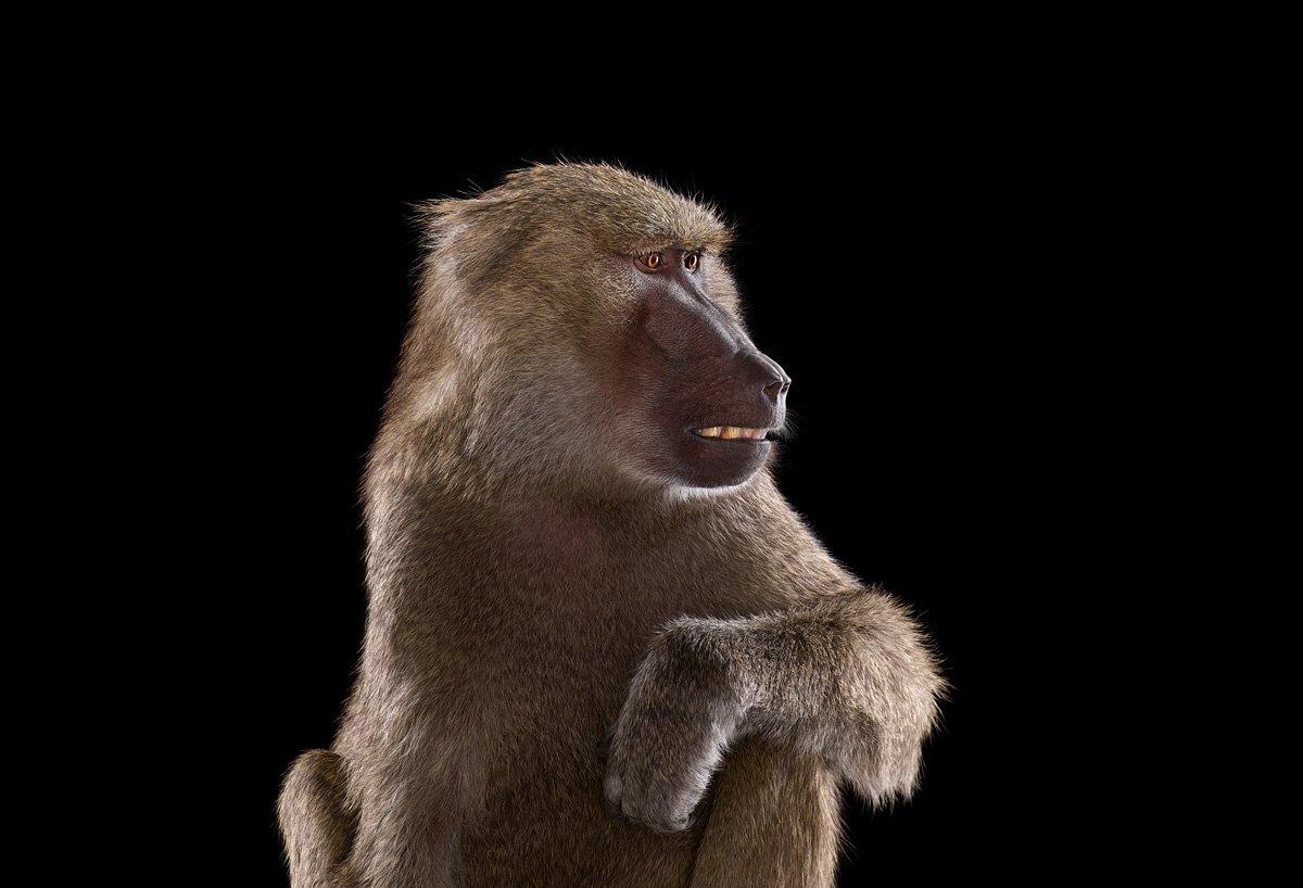 15 retratos fantásticos de animais exóticos tão de pertinho como você nunca viu 10