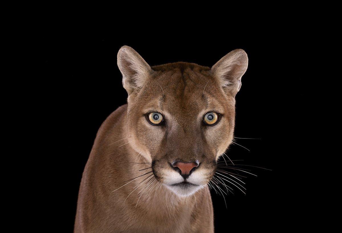 15 retratos fantásticos de animais exóticos tão de pertinho como você nunca viu 11