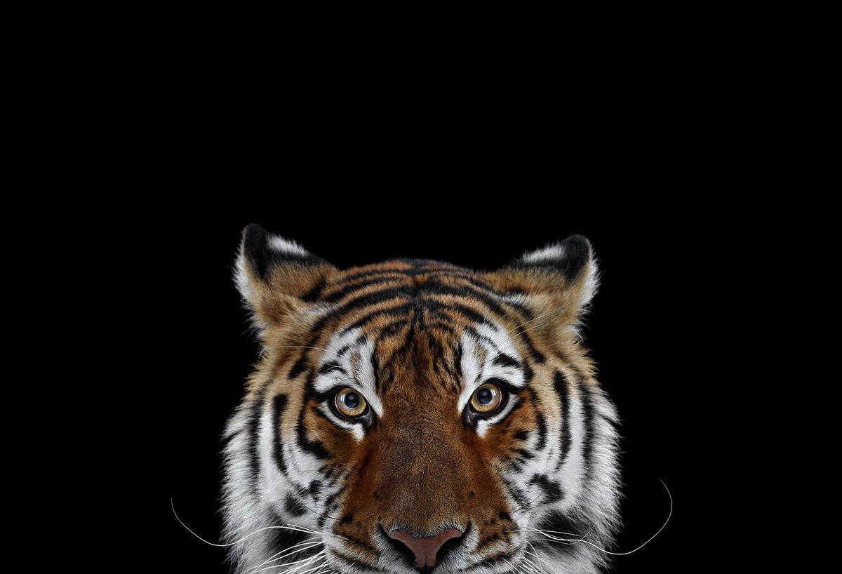 15 retratos fantásticos de animais exóticos tão de pertinho como você nunca viu 12