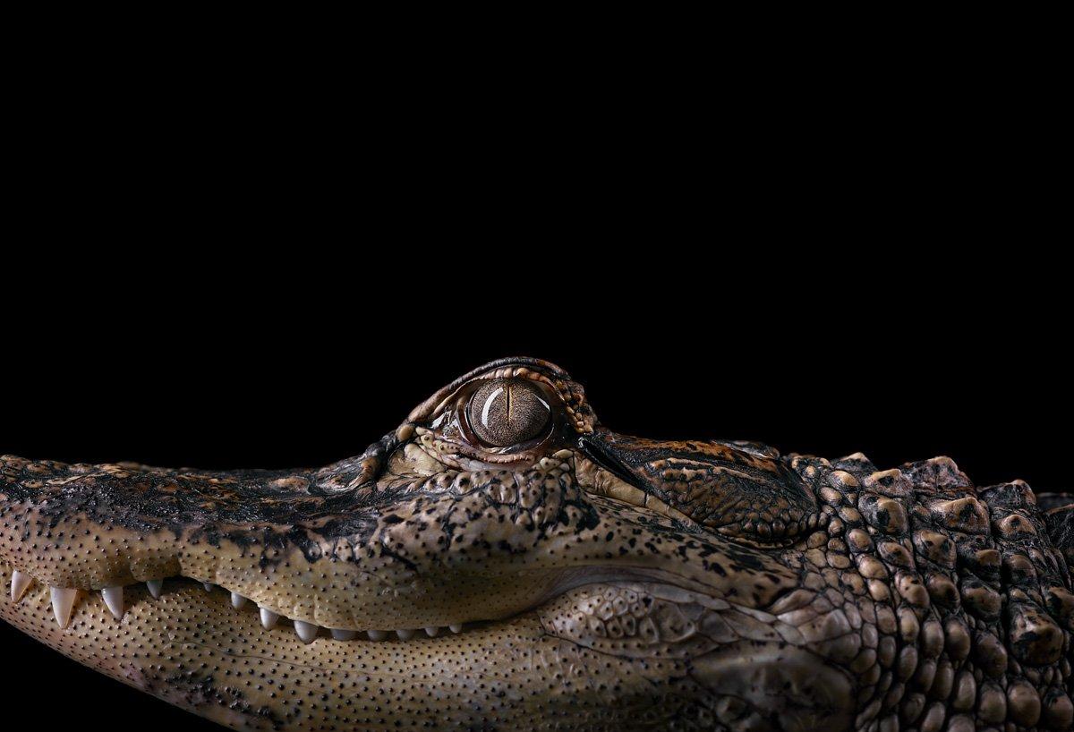 15 retratos fantásticos de animais exóticos tão de pertinho como você nunca viu 13