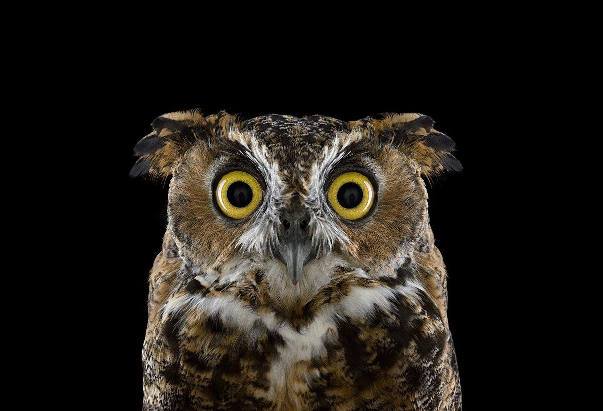 15 retratos fantásticos de animais exóticos tão de pertinho como você nunca viu 14