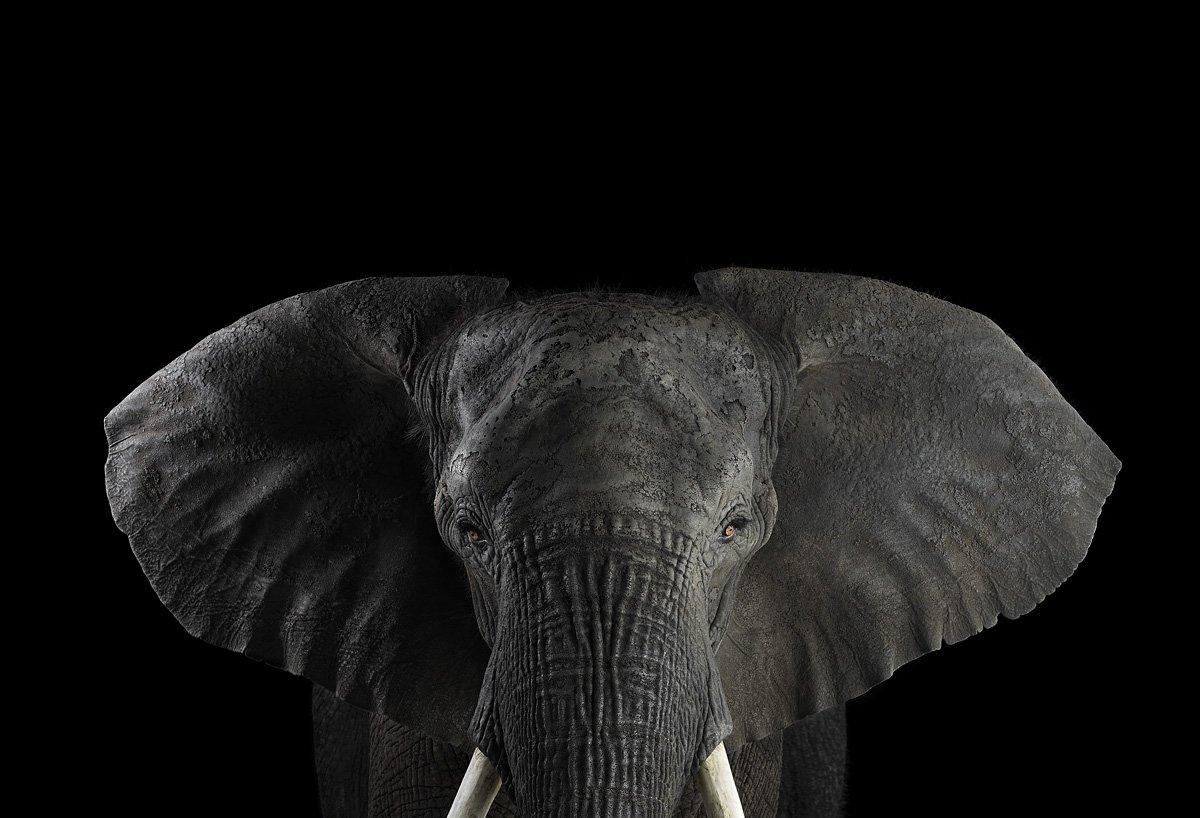 15 retratos fantásticos de animais exóticos tão de pertinho como você nunca viu 15