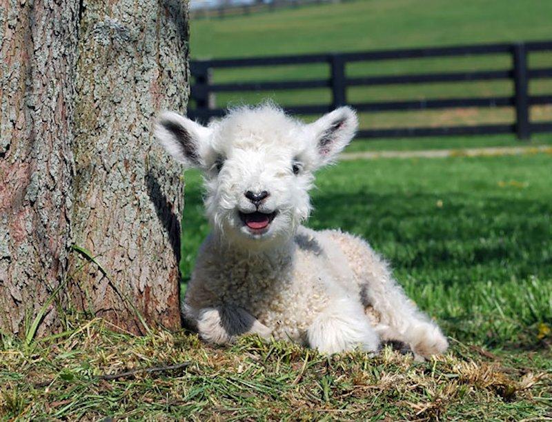 44 animais felizes para alegrar o seu dia 04