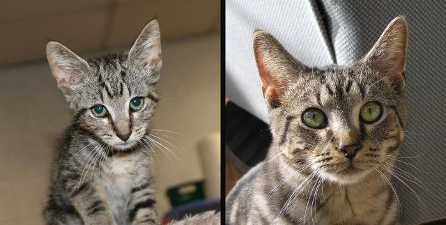 Antes e depois de animais adotados 2 01