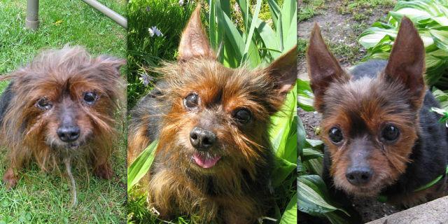 Antes e depois de animais adotados 2 02
