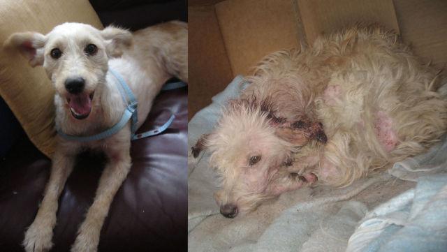 Antes e depois de animais adotados 2 04