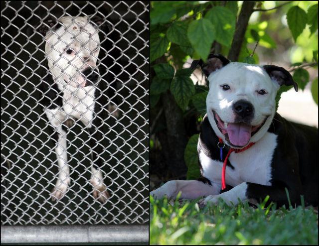 Antes e depois de animais adotados 2 06