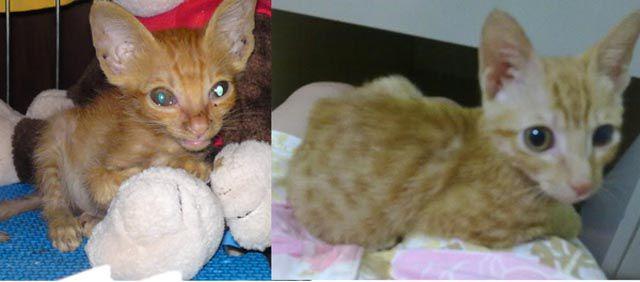 Antes e depois de animais adotados 2 07