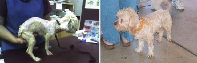 Antes e depois de animais adotados 2 08