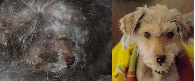 Antes e depois de animais adotados 2 09