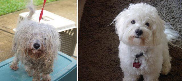 Antes e depois de animais adotados 2 10