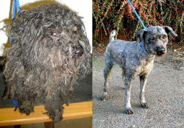 Antes e depois de animais adotados 2 14