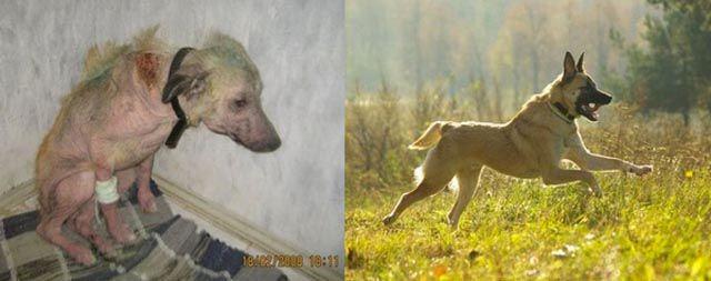 Antes e depois de animais adotados 2 15