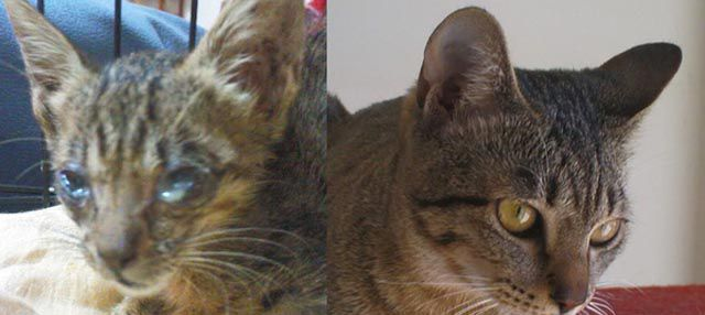 Antes e depois de animais adotados 2 16